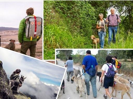 consejos para practicar senderismo con perros